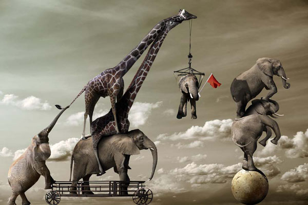 Chris Bennett manipulated photograph, Elephant Acrobats