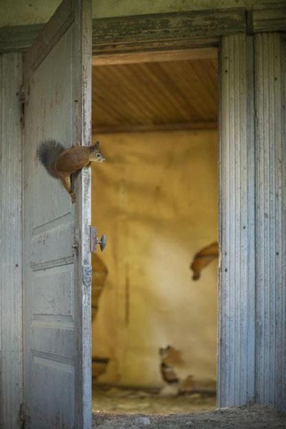 abandoned_house_animals_kai_fagerstrom_05 625 pxY