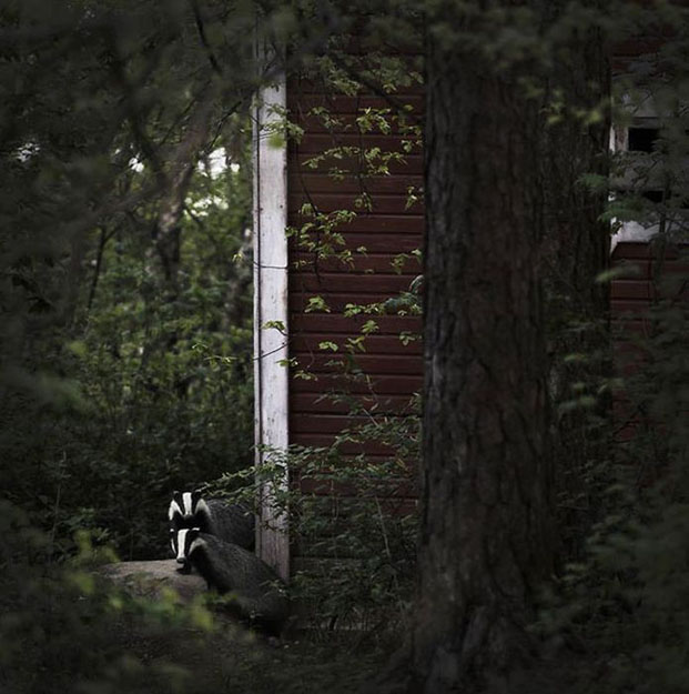 abandoned_house_animals_kai_fagerstrom_06 625 px
