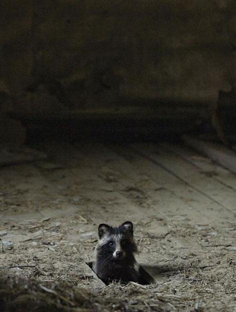 abandoned_house_animals_kai_fagerstrom_07 625pxY