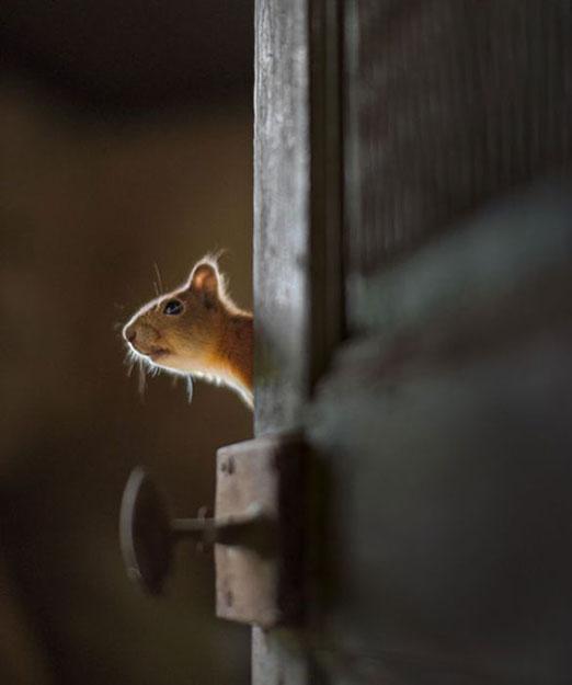 abandoned_house_animals_kai_fagerstrom_14 625 pxY