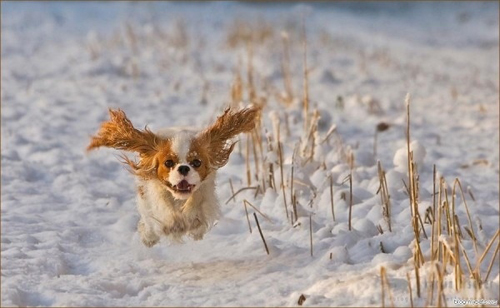 Elated dog in snow. via [unattributed on] buzzfeed