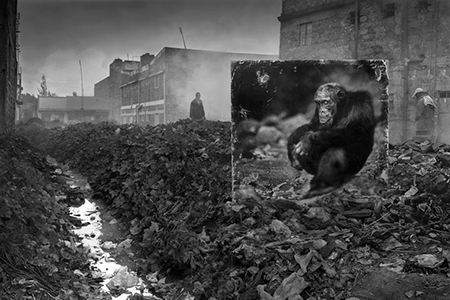 ALLEYWAY WITH CHIMPANZEE