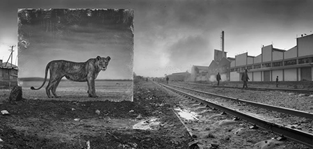 RAILWAY LINE WITH LIONESS